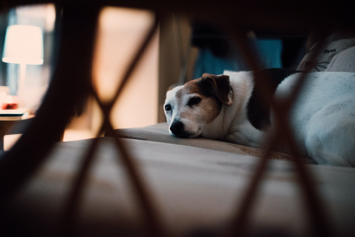 A Closer Look At The Newest Beds For Your Pooch – An Easy Guide