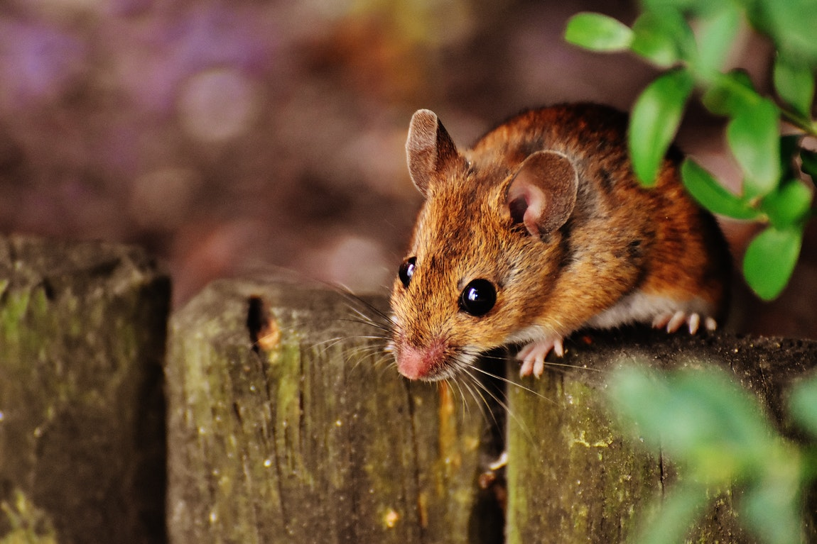 Pest Control – Its Broad Range Of Advantages And Going For It Regularly