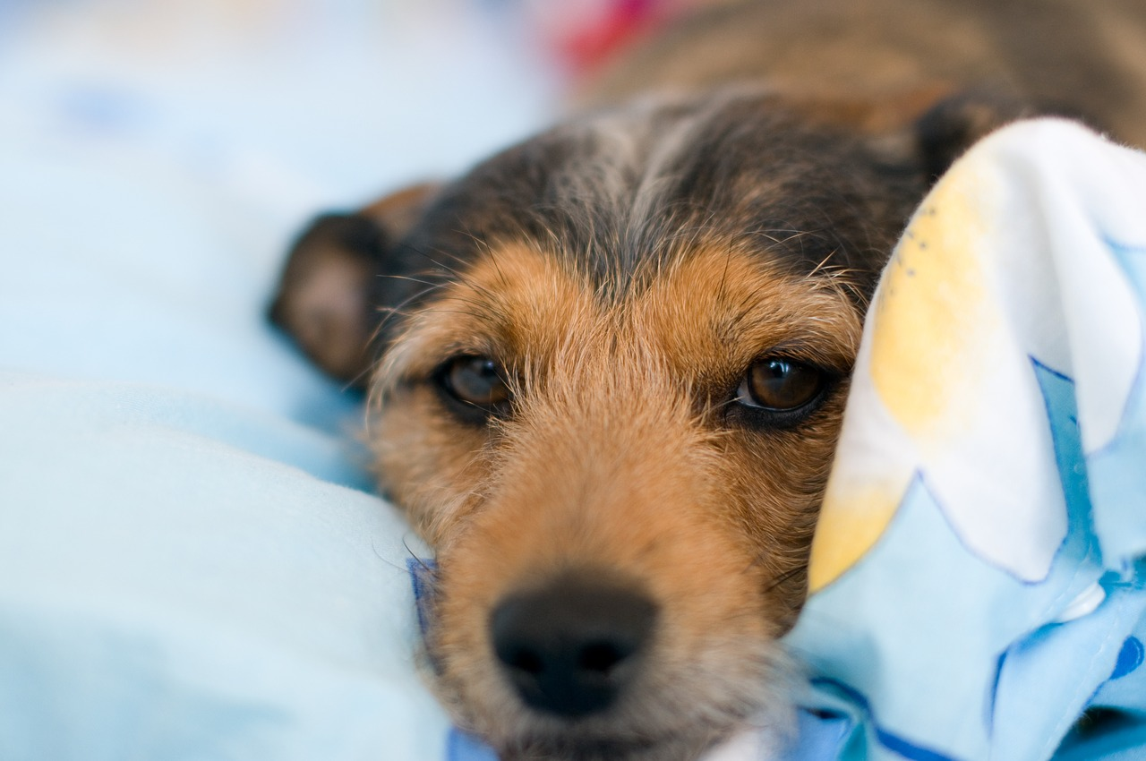 Advantages Of Having The Correct Bed For Your Dog – A Must-Read Guide