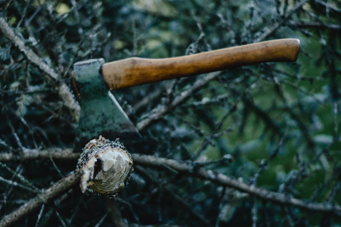 Common Reasons for Tree Cutting and Removal – A Must-Read Guide